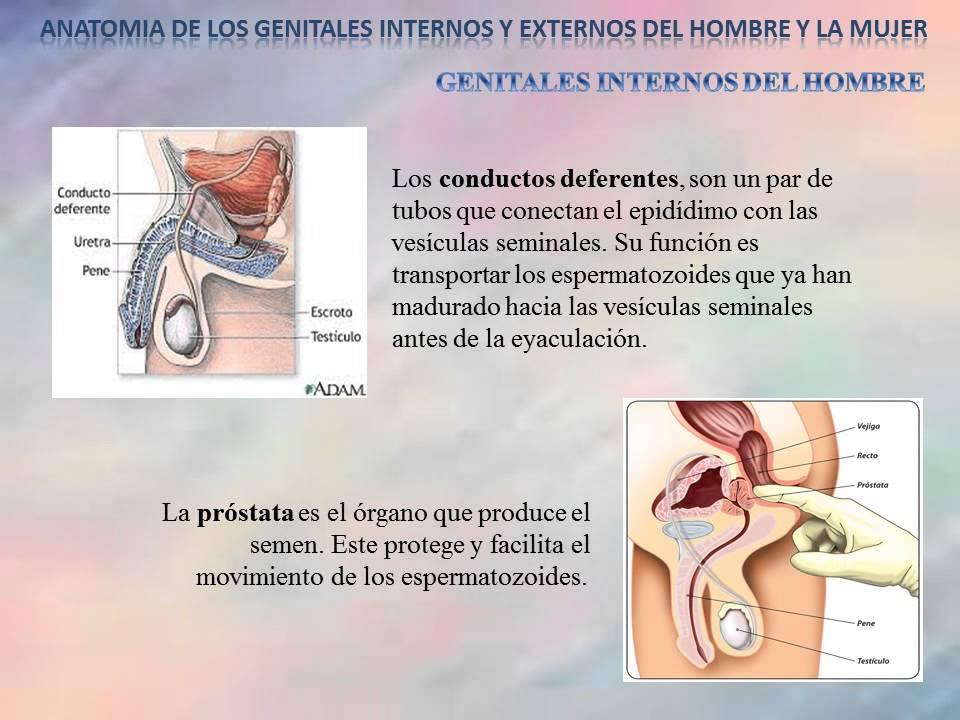 Video Genitales Internos y Externos del hombre y la mujer - YouTube