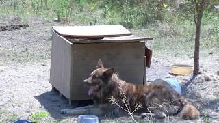 В Черкесске добровольцы строят единственный в КЧР приют для животных
