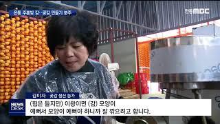 주홍빛 물결..곶감 만들기 한창 / 안동MBC