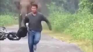 Приколы слон