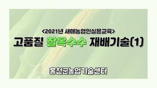 고품질 찰옥수수 재배기술 1