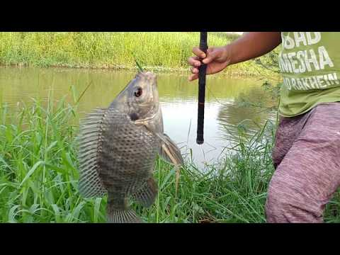 Fish Hunting    Fishing With Hook