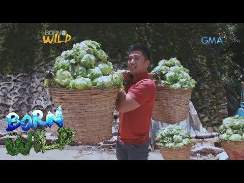 Born to Be Wild: Meet the 'Comboys' of Benguet