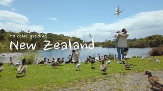 (색보정)아이와 함께한 뉴질랜드 여행, 오즈모 포켓 |…