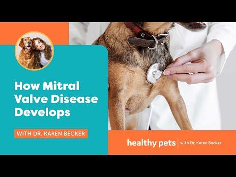 Dr. Becker: How Mitral Valve Disease Develops