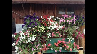 """Фото зрителей канала """"Сад,огород, своими руками"""". Часть 1!"""