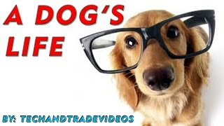 � Puppy Training Guide | House Training Dogs | Dogs Information
