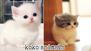 Funny cat - Cute and Funny Baby Cat and dog Videos Compilation #30    koko animals