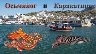 Русская Рыбалка 3.9 Осьминог и Каракатица