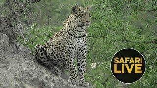 safariLIVE - Sunrise Safari - January 1st, 2019