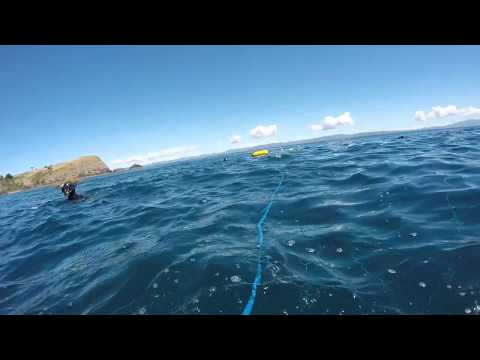 Opito Bay  Spearfishing  (great Mercury Island)