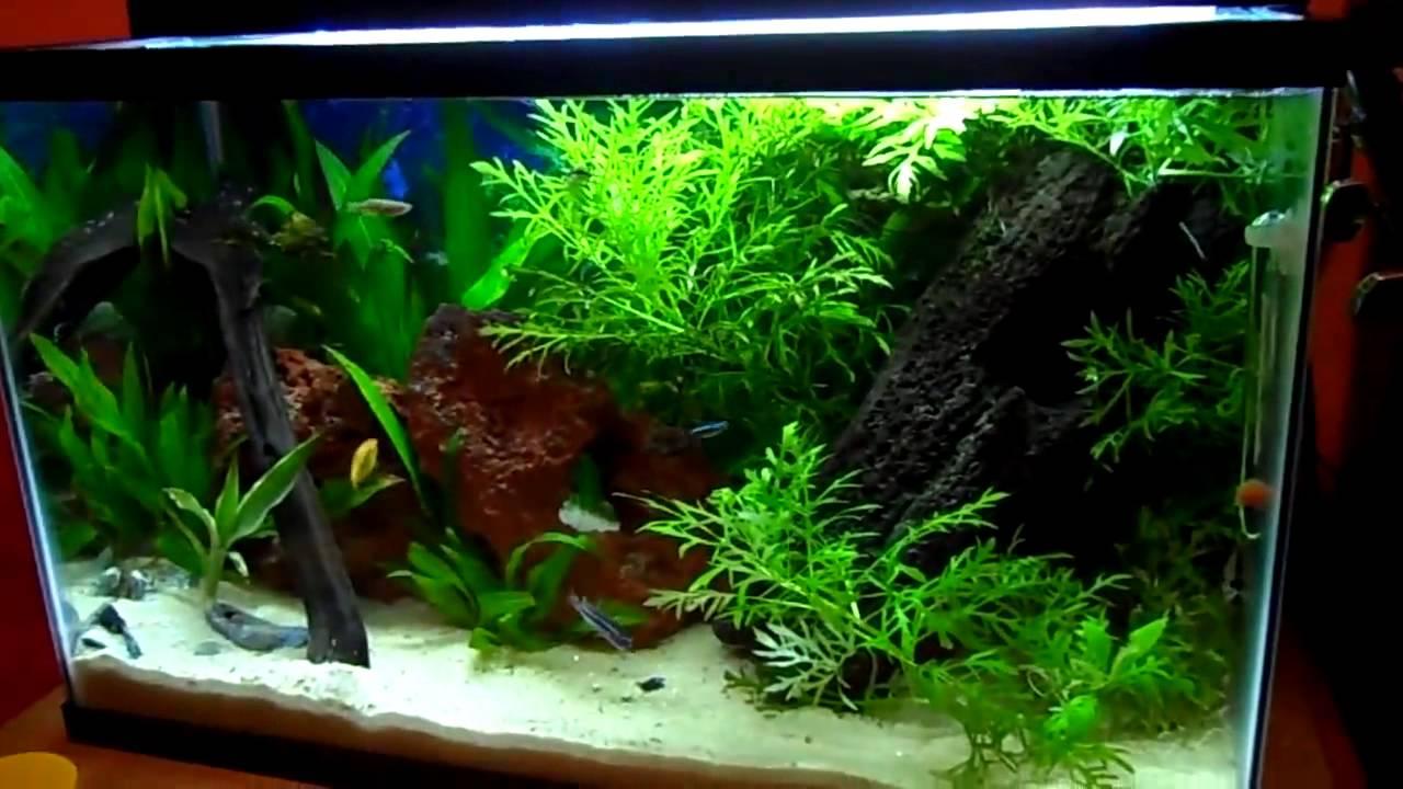 Beautiful 10 Gallon Fish Tank Hd Youtube