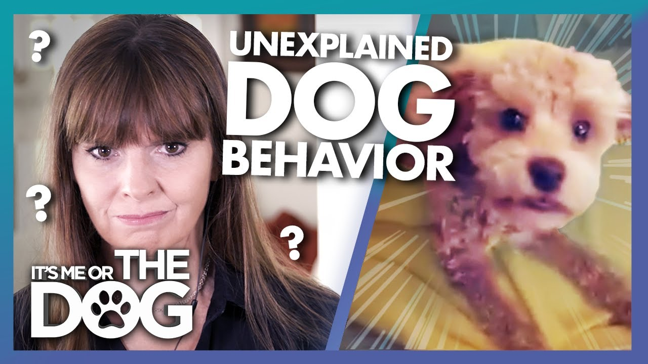 Unexplainable Puppy Behavior Leaves Victoria Stumped | It's Me or The Dog