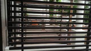 Gayaisland resort canopy villa…
