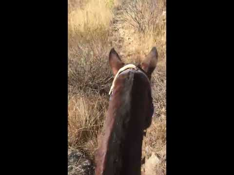 Horseback Argentina Gaucho Style