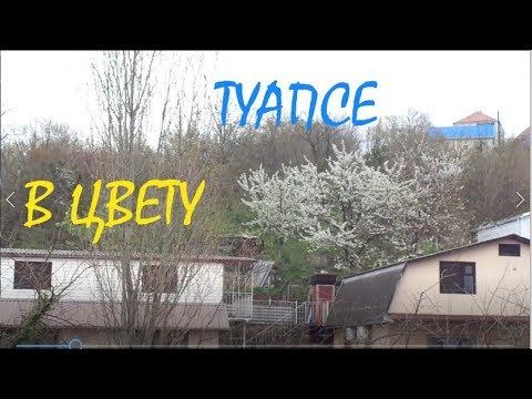 Туапсе в Апреле - Весеннее Настроение - Цветущие Деревья - Где Новые Видео?