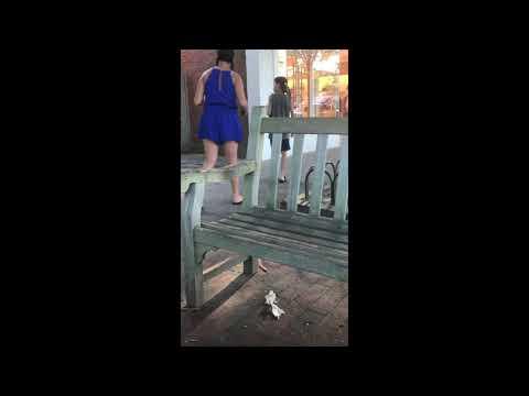 Animal Sound Prank In East Hampton Town