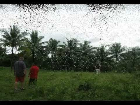Land for Sale in Mohon, Tutay Pinamungajan Cebu Philippines