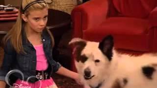 Собака точка ком   1 сезон, 3  4серия