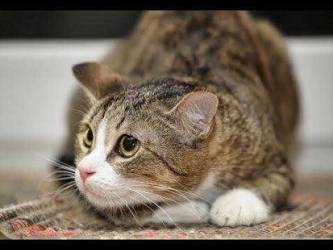 Стресс у кошек: почему бывает и как с ним справиться?