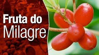 Conheça a Fruta do Milagre e seus Efeitos Surpreendentes