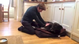Reiki Healing On A Dog, January 2013