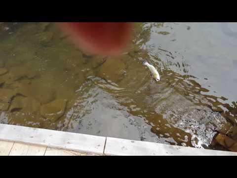 2016 Irvona PA Fishing.Power Bait