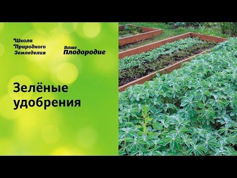 Зелёные удобрения основа