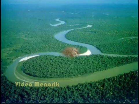 Sungai amazon, sungai terbesar di dunia,banyak banget HEWAN BUASNYA,CEK VIDEONYA !
