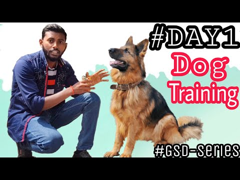Dog Training - Day 1 ( Dog ko kaise Training de ) How to Start Basic Training from the 1st Day #GSD