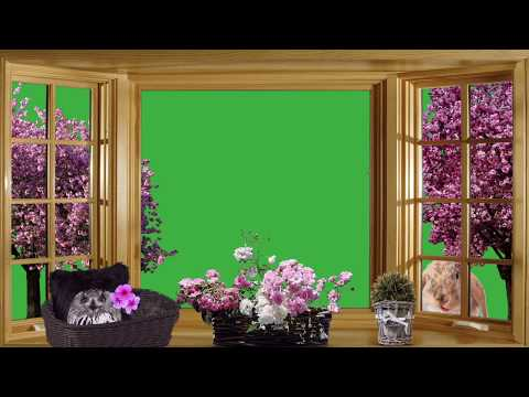 green-screen-hd-background-free-download-no-copyright---view-out-of-window---nice-arrangement