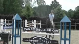 Tendor Fortuna `Sporthorses from Holland` FOR SALE peter bulthuis