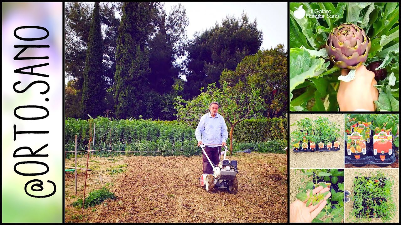 Preparare il terreno per la semina piantare i carciofi for Semina cipolle