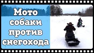 Мотособаки против снегохода. Мотобуксировщики БТС , лыжный модуль, модуль толкач против Ирбис Динго.
