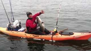 White Seabass by kayak at Half Moon Bay