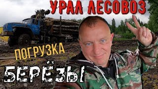 Грузовик Урал 4320 Лесовоз Погрузка березы Манипулятором 6+