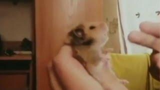 Mira los más divertidos videos sobre animales que se hacen los muertitos