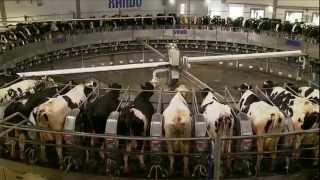 Fazenda Colorado em Araras 70 mil litros por dia