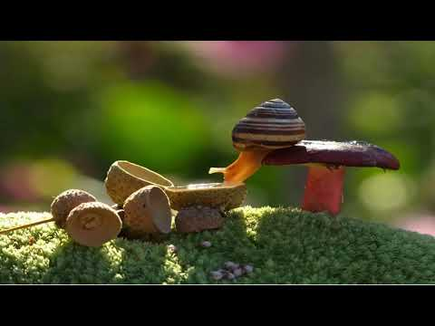 Magical World Of Mushrooms