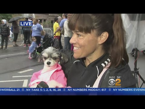 Tinkerbell Becomes First  Dog Of Komen Race For The Cure