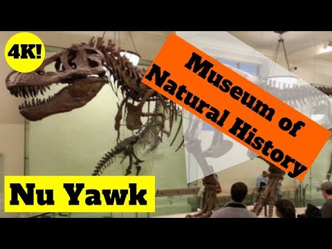 New York City Video Tour Of The Museum Of Natural History 4K