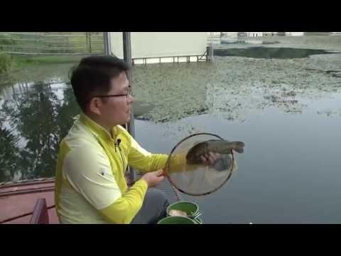 [양어장] 33.수상좌대 손맛낚시터 - 경기 용인