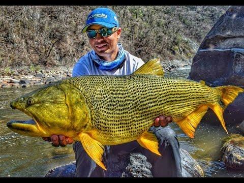 CRISTIAN VANEGAS Wild Golden Dorado Fishing in Bolivia 2016.