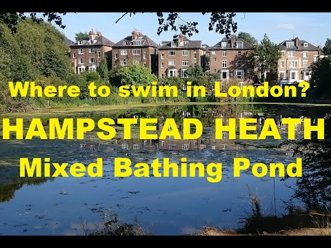 Where to swim in London: Hampstead Heath (Mixed Bathing Pond)