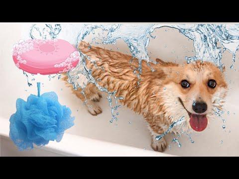 Как купать и сушить собаку