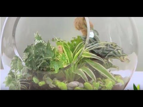 diy d co terrarium tropical ouvert jardinerie truffaut tv youtube. Black Bedroom Furniture Sets. Home Design Ideas