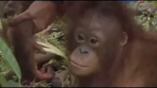 Остров орангутанов, сезон 1, серия 4 - Уроки выживания
