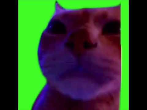 Dennis Horn On Twitter I Just Love The Green Screen Queen Meme
