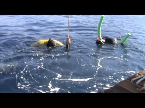 AIDA Freediving WC Kalamata FIM
