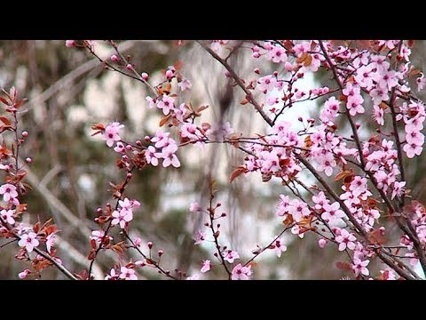 Температурные качели и погодные капризы (1-7 апреля 2019)